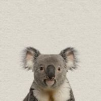 Marmont Hill Playful Koala 12-Inch Square Canvas Wall Art