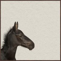 Marmont Hill Black Horse III 16-Inch Square Framed Wall Art