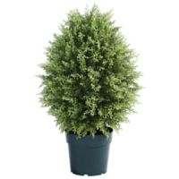 National Tree Company® 30-Inch Artificial Cypress Tree in Planter