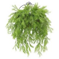 National Tree Company® 20-Inch Pine Branch Artificial Wall Hanging Plant