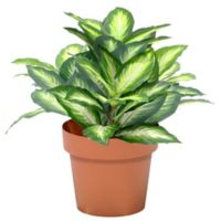 National Tree Company® 15-Inch Artificial Hosta Plant in Planter