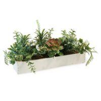 Boston International Succulent Tablescape