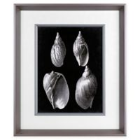 Alabaster Shells III 23.5-Inch x 19.5-Inch Framed Wall Art