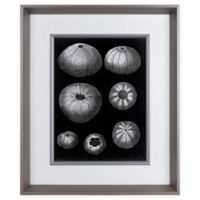 Alabaster Shells I 23.5-Inch x 19.5-Inch Framed Wall Art
