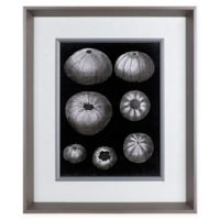 Alabaster Shells IV 23.5-Inch x 19.5-Inch Framed Wall Art