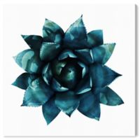 Oliver Gal Succulent 12-Inch x 12-Inch Canvas Wall Art