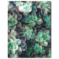 Oliver Gal Succulents 24-Inch x 32-Inch Canvas Wall Art in Green
