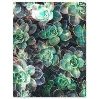 Oliver Gal Succulents 16-Inch x 12-Inch Canvas Wall Art in Green