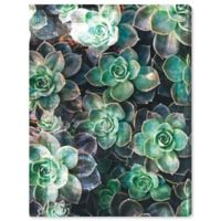 Oliver Gal Succulents 18-Inch x 24-Inch Canvas Wall Art in Green