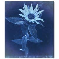 Olive Gal Flower Sun Cyanotype 28-Inch x 24-Inch Canvas Wall Art