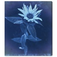 Olive Gal Flower Sun Cyanotype 24-Inch x 20-Inch Canvas Wall Art
