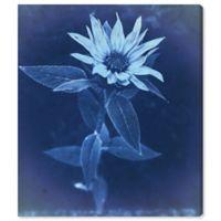 Olive Gal Flower Sun Cyanotype 20-Inch x 17-Inch Canvas Wall Art