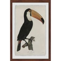 Marmont Hill Quiet Toucan 16-Inch x 24-Inch Framed Wall Art