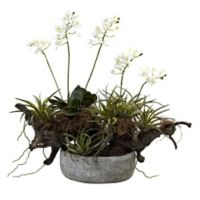 Nearly Natural Artificial Orchid & Succulent Garden in Vase
