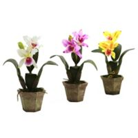 Nearly Natural Artificial Cattelya Orchids in Vases (Set of 3)