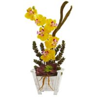 Nearly Natural 20-Inch Orchid and Succulent Artificial Arrangement with Chair Planter in Yellow