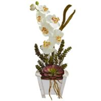 Nearly Natural 20-Inch Orchid and Succulent Artificial Arrangement with Chair Planter in Cream