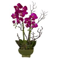 Nearly Natural Orchid & Succulent Floral Arrangement