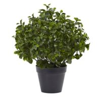 Nearly Natural™ 23-Inch Indoor/Outdoor Peperomia Plant in Black Pot