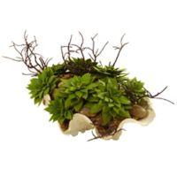 Nearly Natural Artificial Succulent Garden in Seashell