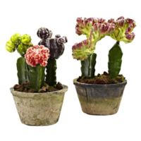 Nearly Natural Colorful Cactus Gardens Artificial Arrangements (Set of 2)