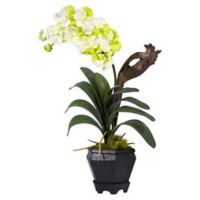 Nearly Natural Artificial White Vanda Orchid in Vase