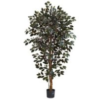 Nearly Natural 6-Foot Artificial Capensia Ficus Tree