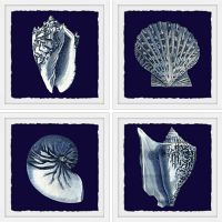 Marmont Hill All About Shells 24-Inch Square Framed Wall Art (Set of 4)