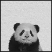 Marmont Hill Fluffy Panda II 20-Inch Square Floater Frame Canvas Wall Art