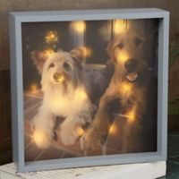 Pet Photo 10-Inch x 10-Inch LED Light Shadow Box