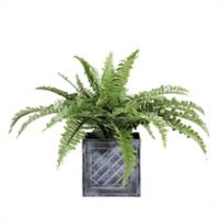 Northlight 20-Inch Artificial Boston Fern in Decorative Distressed Square Black Tin Pot