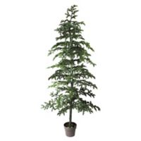 Northlight 78-Inch Spruce Topiary Tree with Terracotta Planter