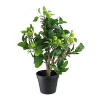 Northlight 23-Inch Bonsai-Style Apple Tree in Green with Black Pot