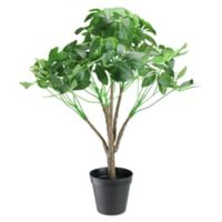 Northlight 23-Inch Arboricola Potted Umbrella Tree in Green with Black Pot