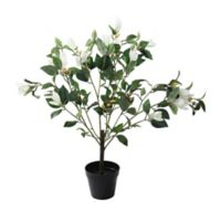Northlight 32.5-Inch Lily Magnolia Flowering Tree in White with Black Pot