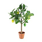 Northlight 25-Inch Lemon Tree in Green with Brown Pot