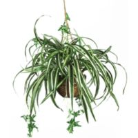 Nearly Natural 20-Inch Spider Silk Plant Hanging Basket