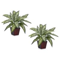 Nearly Natural Silver Queen Silk Plants w/Planter (Set of 2)