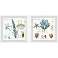 Marmont Hill Flower Structure 24-Inch x 12-Inch Framed Diptych Wall Art (Set of 2)