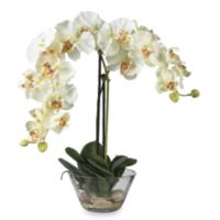 Nearly Natural 20-Inch Artificial Phalaenopsis with Glass Vase Flower Arrangement in White