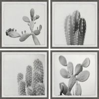 Marmont Hill Cacti Types 24-Inch Square Quadriptych Wall Art