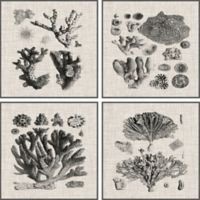 Marmont Hill Coral Specimen 36-Inch Square Framed Quadriptych Wall Art