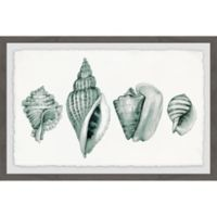 Marmont Hill Four Shells 18-Inch x 12-Inch Framed Wall Art