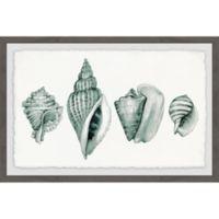 Marmont Hill Four Shells 24-Inch x 16-Inch Framed Wall Art