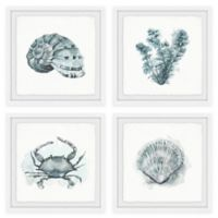 Marmont Hill Sea Life 36-Inch Square Framed Quadriptych Wall Art