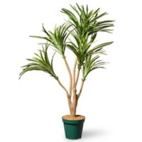 National Tree Company® 3-Foot Dracaena Artificial Plant with Pot