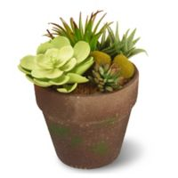 National Tree Company® 8-Inch Succulent Artificial Plant with Pot