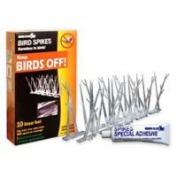 Bird-X 10-Feet Plastic Bird Control Spikes with Glue