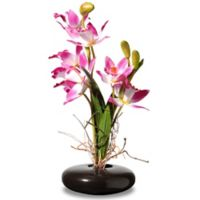 National Tree Company Artificial 10-Inch Orchid Arrangement in Pink with Black Planter
