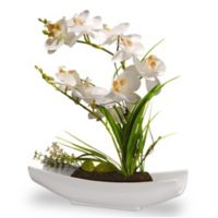 National Tree Company 13-Inch Artificial Orchid Arrangement with Glossy White Planter